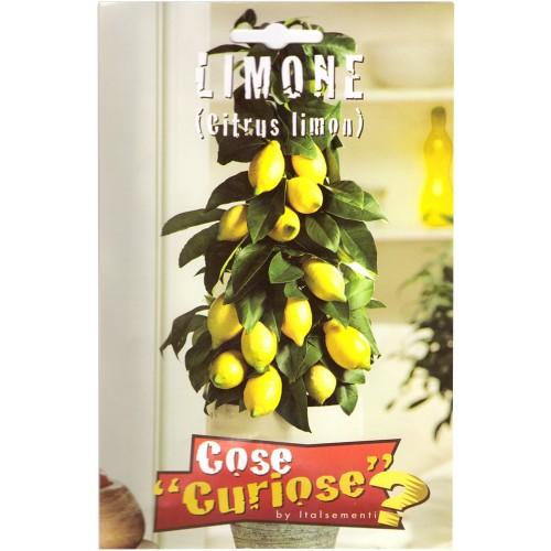 Limone (Citrus Limon)