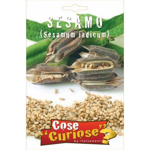 Sesamo - Sesamum indicum