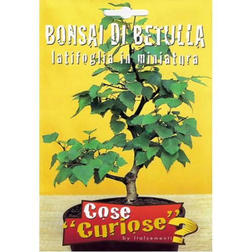 Bonsai di Betulla