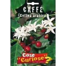 Caffè - Coffea arabica