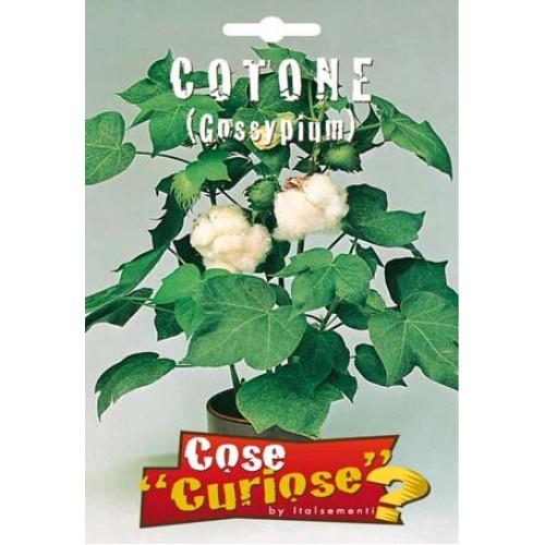Cotone - Gossypium barbadense