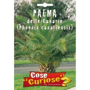 Palma delle Canarie - Phoenix Canariensis