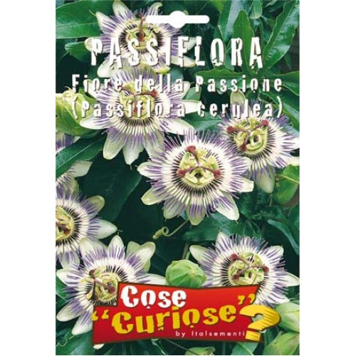 Passiflora - Passiflora Caerulea (Fiore della passione)