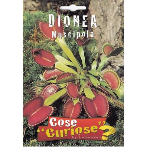 Dionaea muscipula for Pianta carnivora prezzo